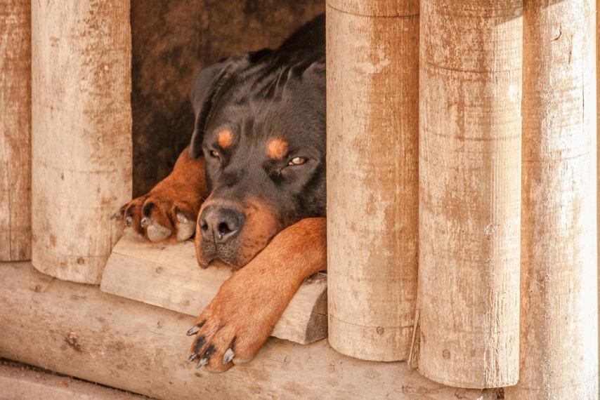 Правильная будка для собаки