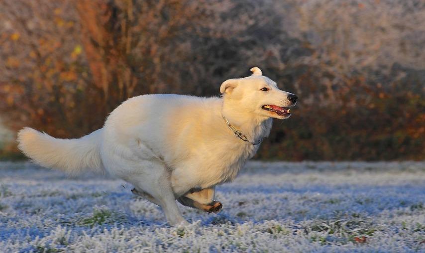 Как ухаживать за разными видами собак зимой