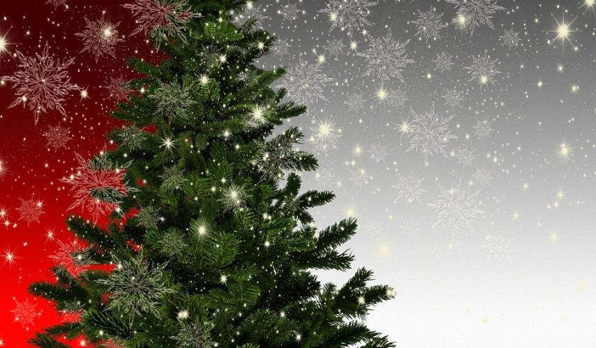 Выбираем живую елку для праздников