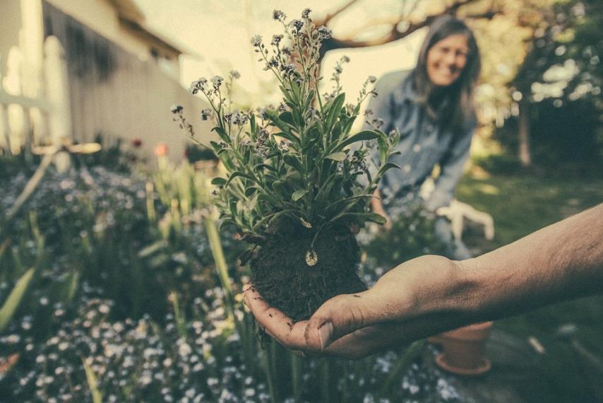 Растения для не слишком опытного садовода