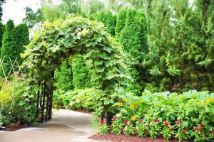 Шпалеры: удобное размещение лазающих растений