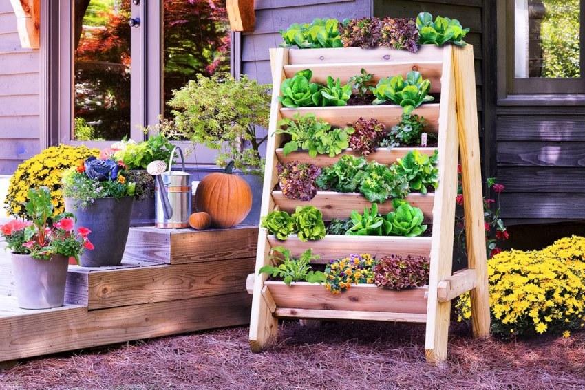 Послтавка для выращивания растений не потребует создания межей между ними