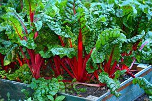 Как обустроить огород в первый год