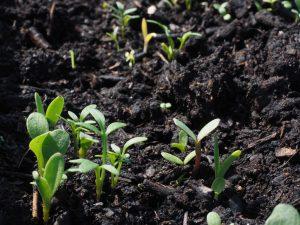 растения для начинающих