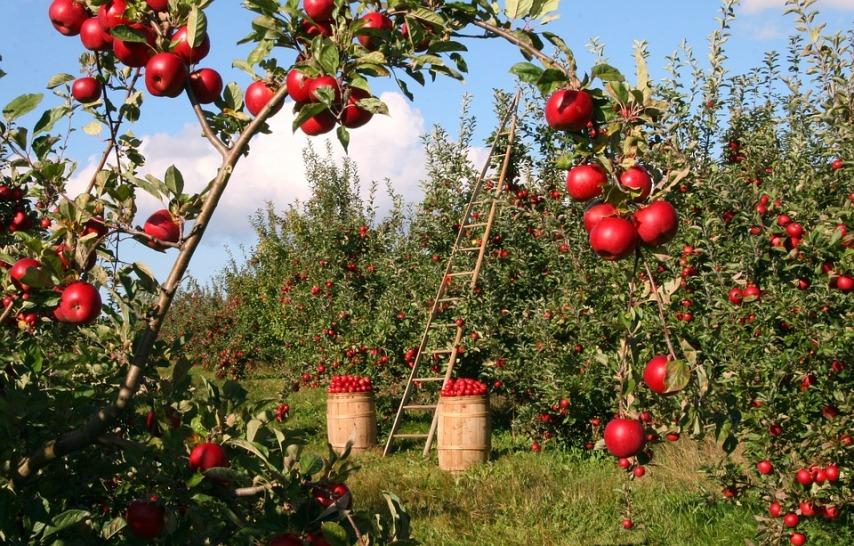 Как правильно поливать садовые деревья