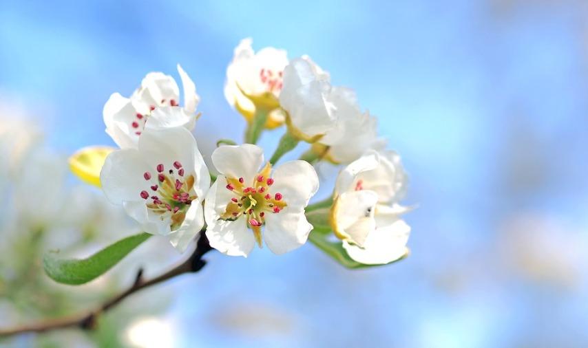 Цветение - залог урожая