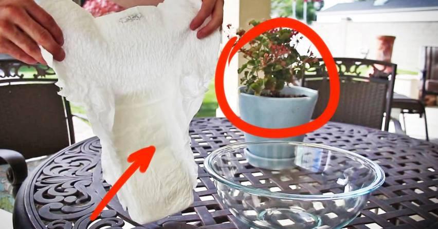 Памперс и комнатные растения