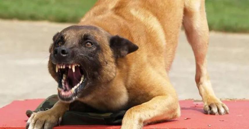 Соседи могут провоцировать домашних животных