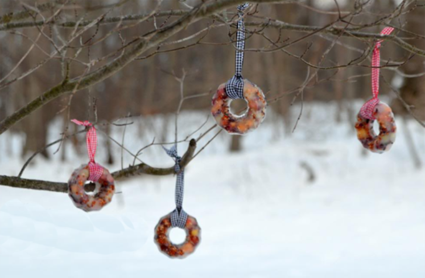 работы по кормлению птиц, кольца