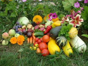 «Копеечные» средства из аптеки – эффективные помощники в огороде