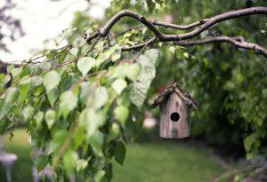 Птицы на нашем участке: как прийти к согласию