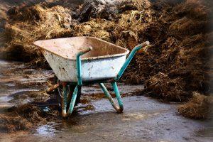 Настой навоза — незаменимый помощник садовода