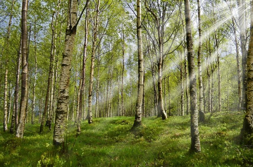 Лес - место обитания клещей