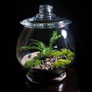 Растения в аквариуме: обустройство и уход