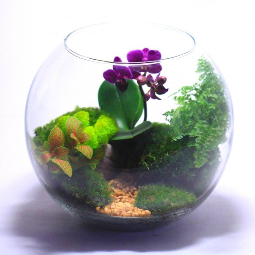 Композиции в аквариуме