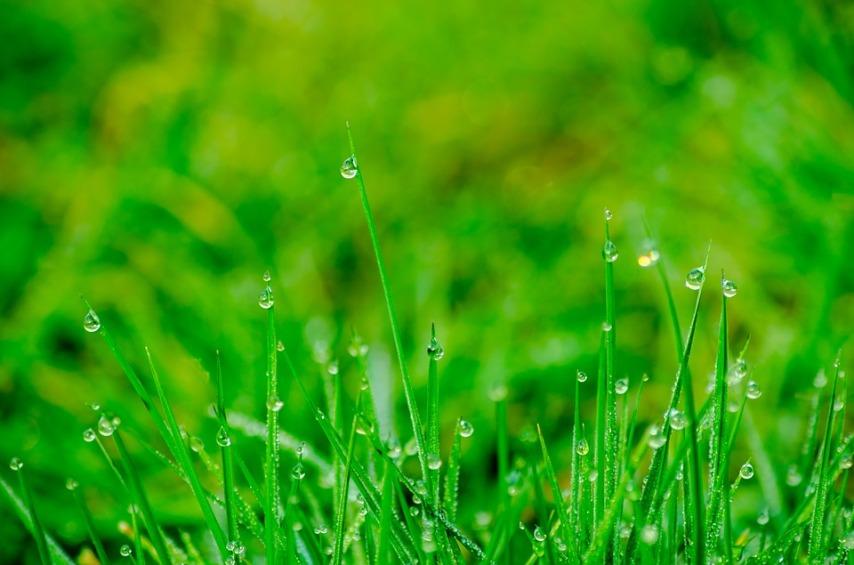 На траве обитает большая часть клещей