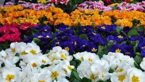 Самые ранние цветы для сада: встретим весну красиво!