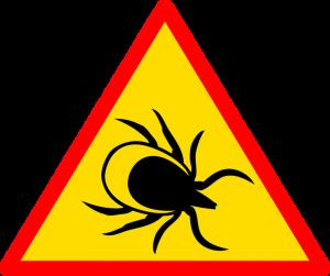 Внимание: иксодовые клещи – главная опасность весны