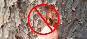 Жуки-пилильщики в деревянном доме: как защитить строение
