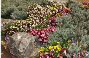 Альпийская горка – красота и гармония Альп в вашем саду