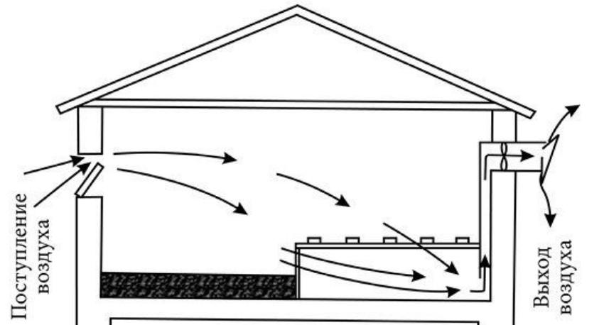 Схема птичника цесарок