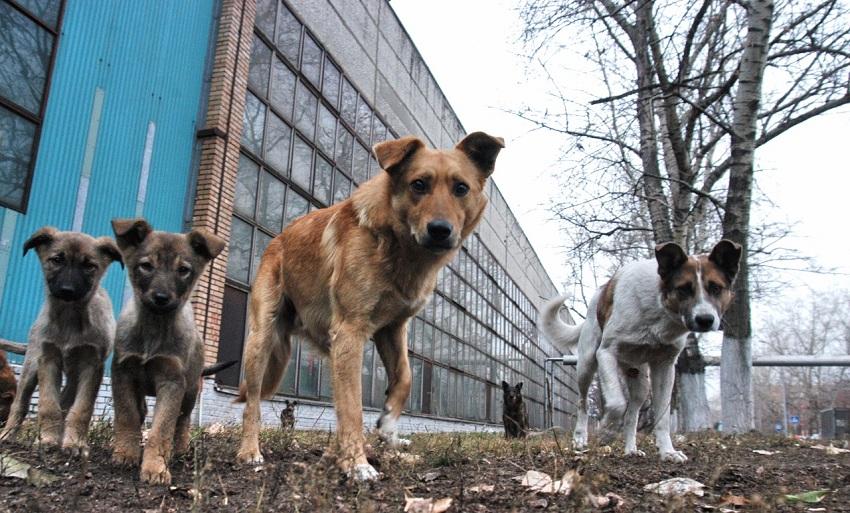 Бродячие собаки в пром зоне