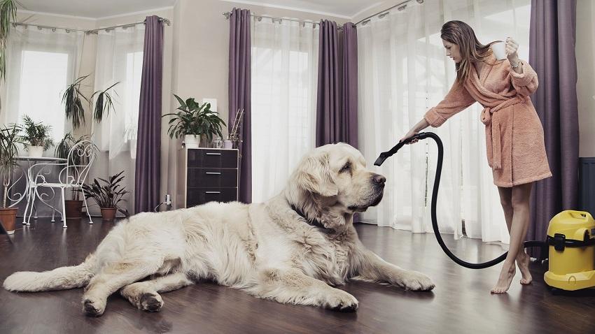 Большая собака и уборка при помощи пылесоса
