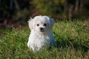 Городская собака в частном доме: советы владельцам