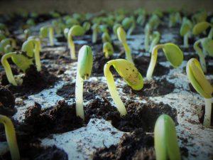 Стимуляторы роста и образования корней своими руками