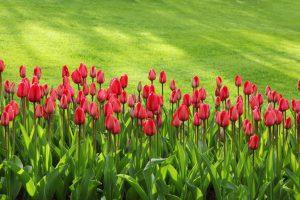 Как победить сорняки: устраняем дерн и создаем красивый газон