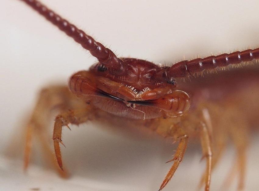 10 насекомых, которые живут в нашем доме