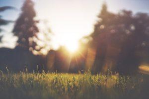 Весенний уход за газоном