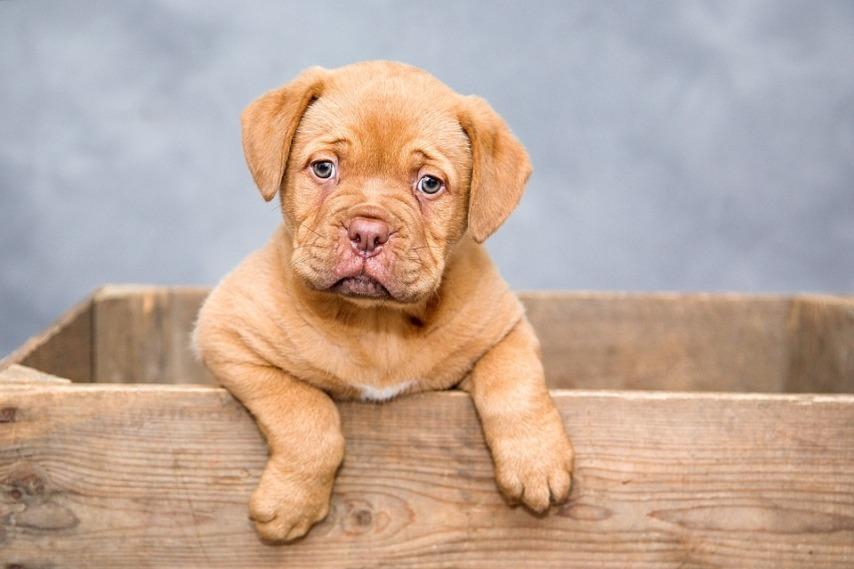 Создать комфорт для питомцев: уютные лежанки для собак
