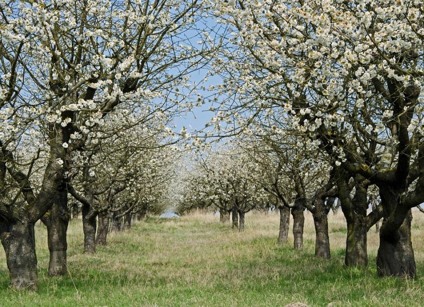 Районированность деревьев