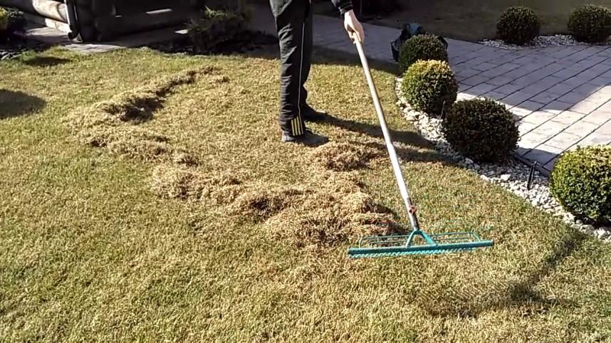 Уборка мусора и сухой травы