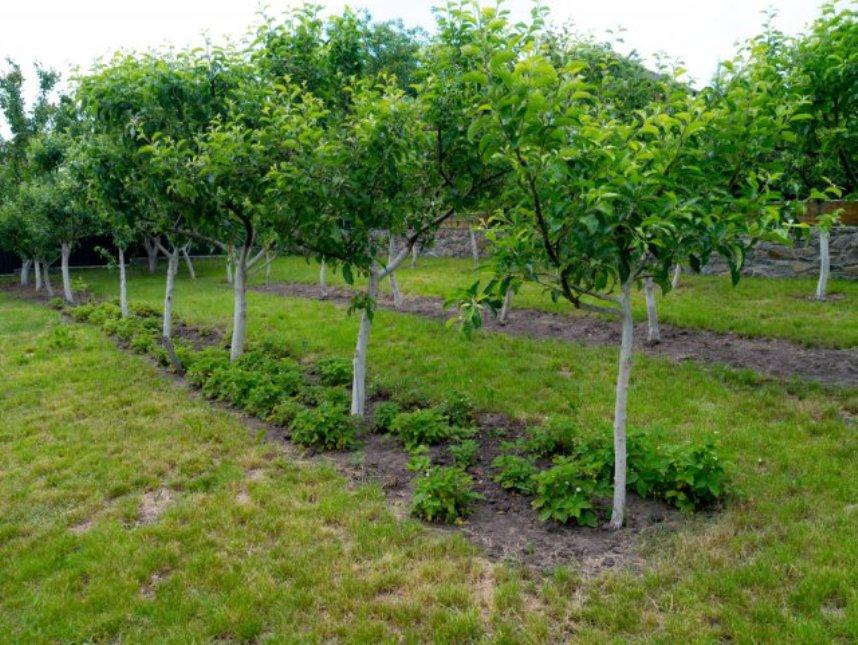Соседи для деревьев в саду