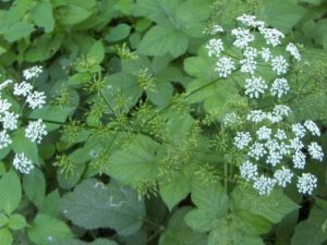 Органическое удобрение, часть вторая: растения на службе плодородия