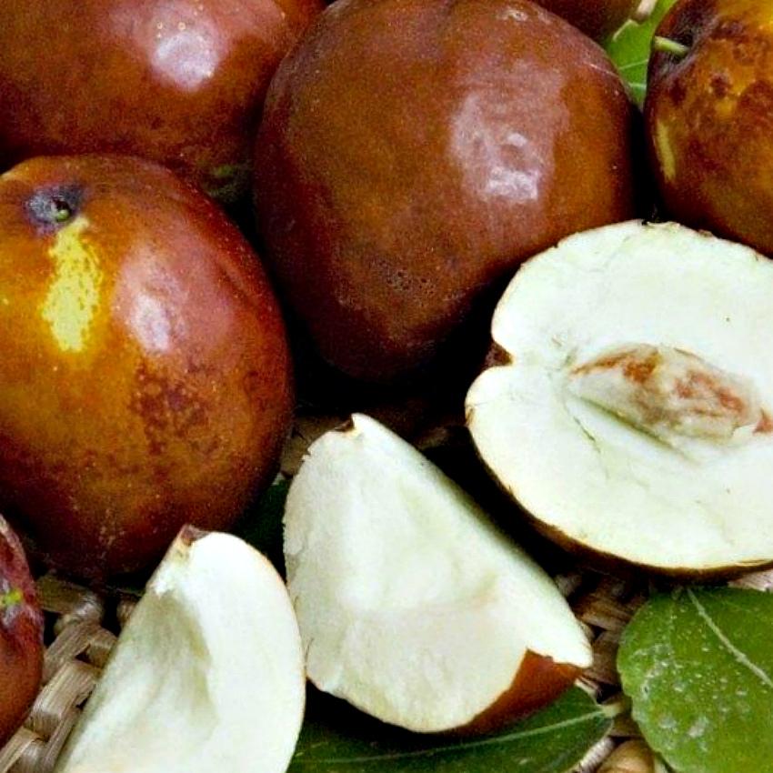 плоды зизифус