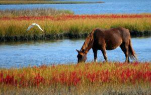 Домашний питомец - лошадь