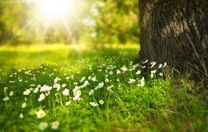 Ранняя весна: что можно посадить в открытый грунт