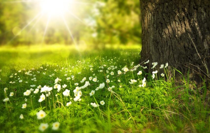 Сажаем в открытый грунт ранней весной