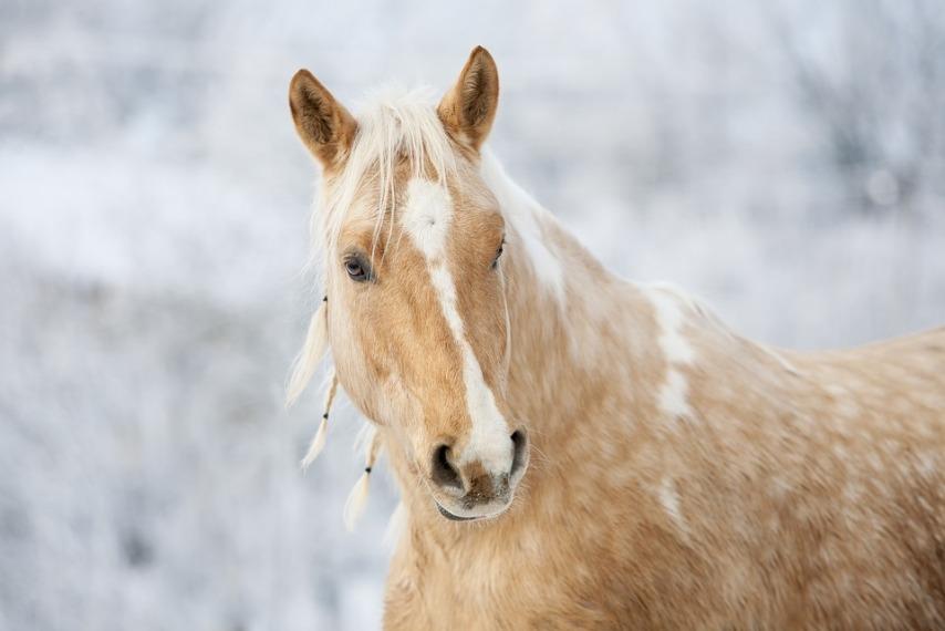 Хранение корма для лошади