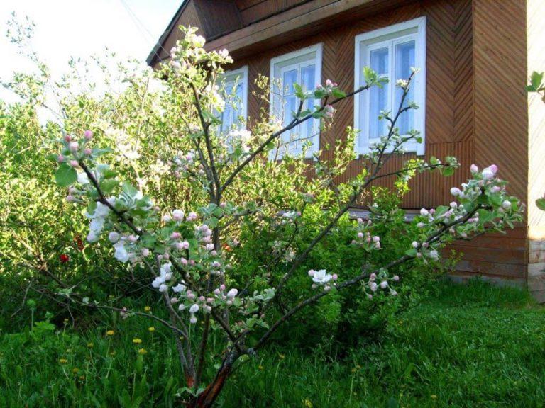 Дача весной