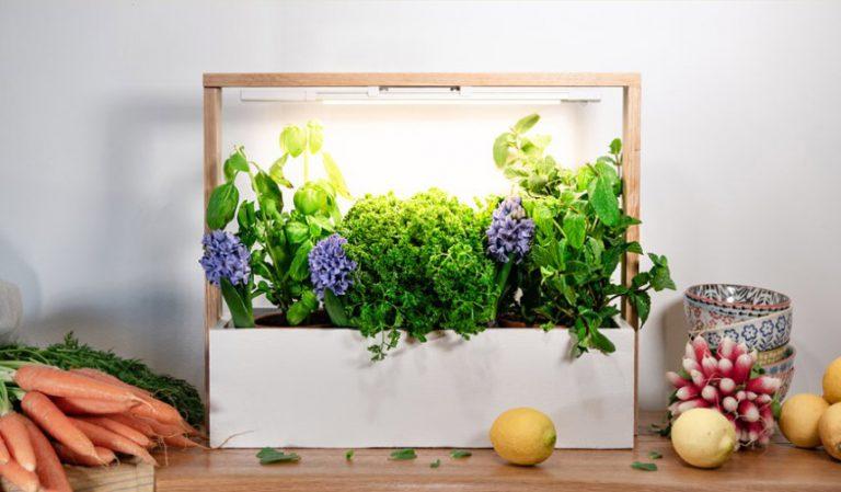 Домашний мини-огород