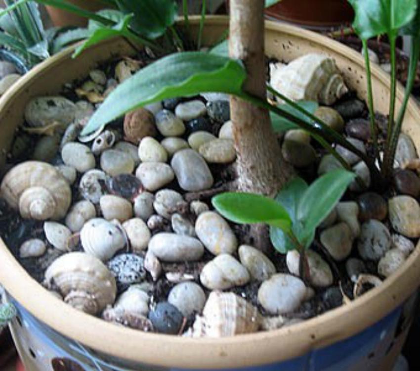 камешки в цветочных горшках