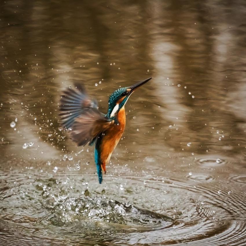 Вода для птиц