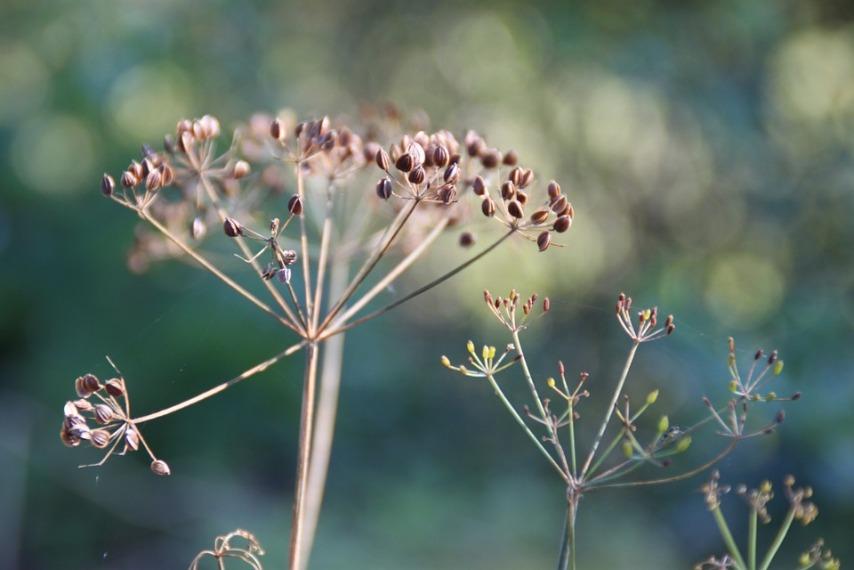 Сбор семян