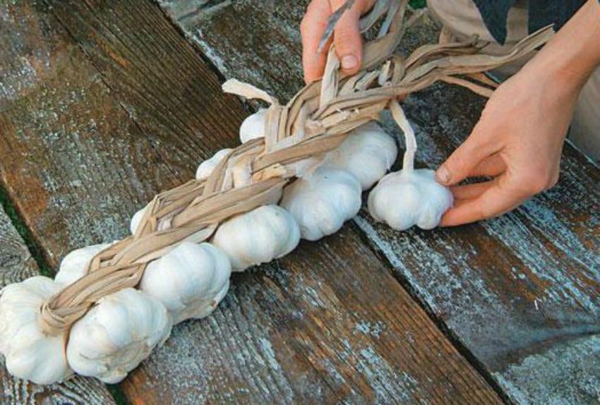 хранение чеснока в косичках