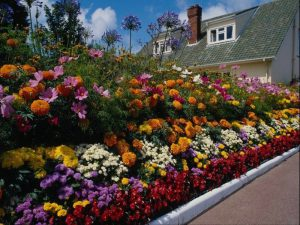 Осенний посев цветов для красивой клумбы в новом сезоне