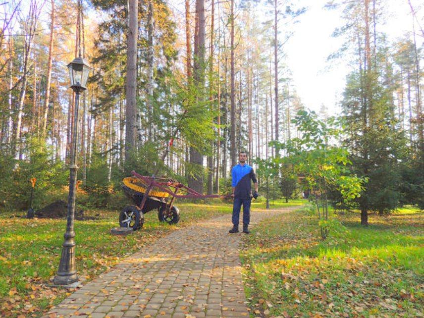 Транспортировка пересаживаемого дерева